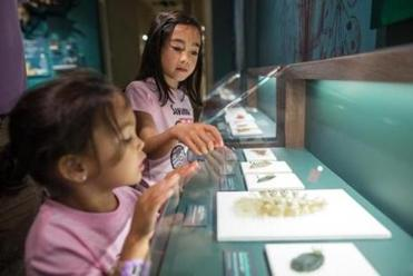 Caitlin Campbell, 4 (bottom front), and her sister Savanna, 7, are among the new wave of admirers to study the restored Blaschka glass sea creatures at the Harvard Museum of Natural History.