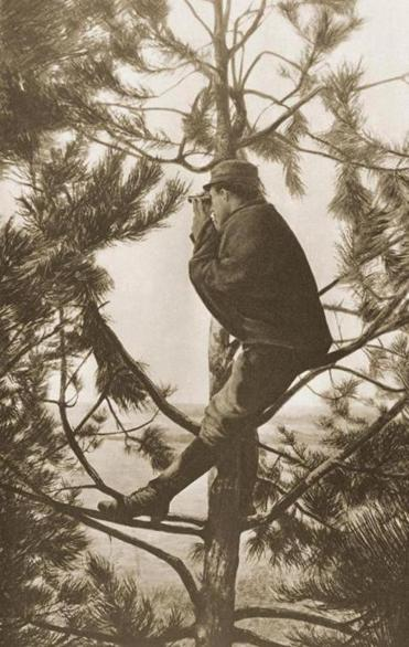 A French observer up a tree during the First World War. From L'illustration, 1915.