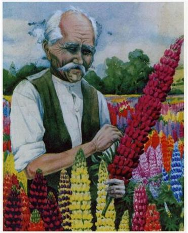 George Russell, the horticulturist who single-handedly changed the lupin.