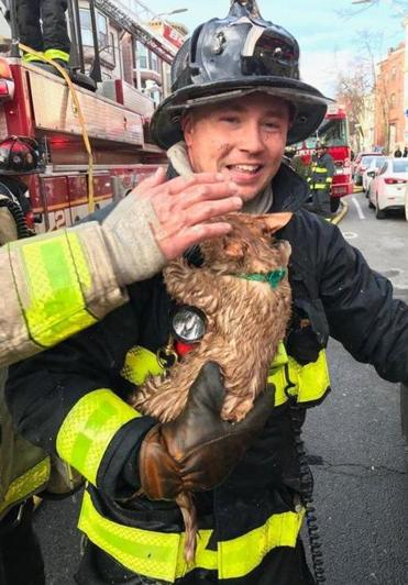 Boston firefighters rescued a cat on the third floor of a three-alarm fire on Meridian Street in East Boston on Sunday.