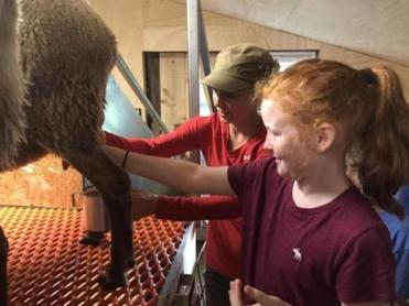 Suzy Kaplan helps a guest milk a sheep.
