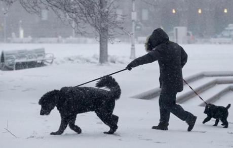 Dogs pulled their human in two different directions as snow fell in Boston during the early part of the nor'easter.
