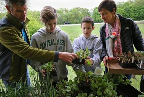Dean and Alysia Valoras and their children, Emily and Nicholas, shopped for plants during Plantapalooza at Brigham Hill Community Farm in North Grafton. Alexandra had volunteered at the farm.