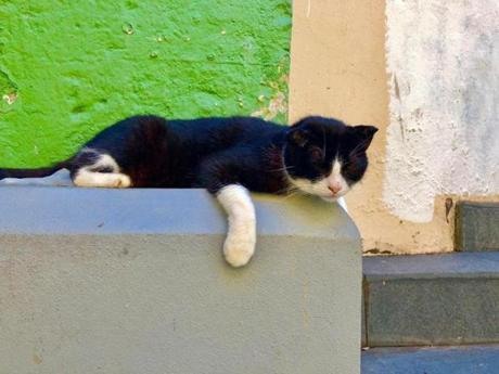 SAN JUAN, Jan. 16. After the devastation of hurricane Maria just months before, Old San Juan was cleaned up in time for the winter season. The crowds had yet to return and after the cruise ships departed each day, the streets emptied out and the cats could relax.
