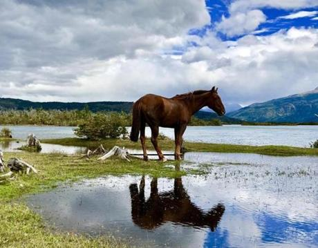 E NATIONAL PARK, MAGALLANES REGION, Chile, Feb. 19. I didn't think much about the herd of horses drinking from a pond until I looked down and saw this horse's perfect reflection in the water.