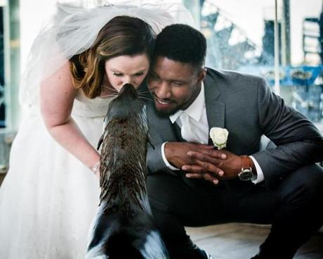 A bride and groom greet a northern fur seal at the New England Aquarium.
