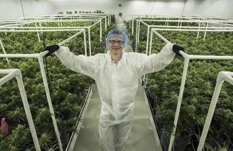 Milford MA 6/19/18 Mike Dundas CEO of Sira Naturals, a marijuana cultivation facility that may be the first in Massachusetts to receive a state recreational license in one of their grow rooms. (photo by Matthew J. Lee/Globe staff)
