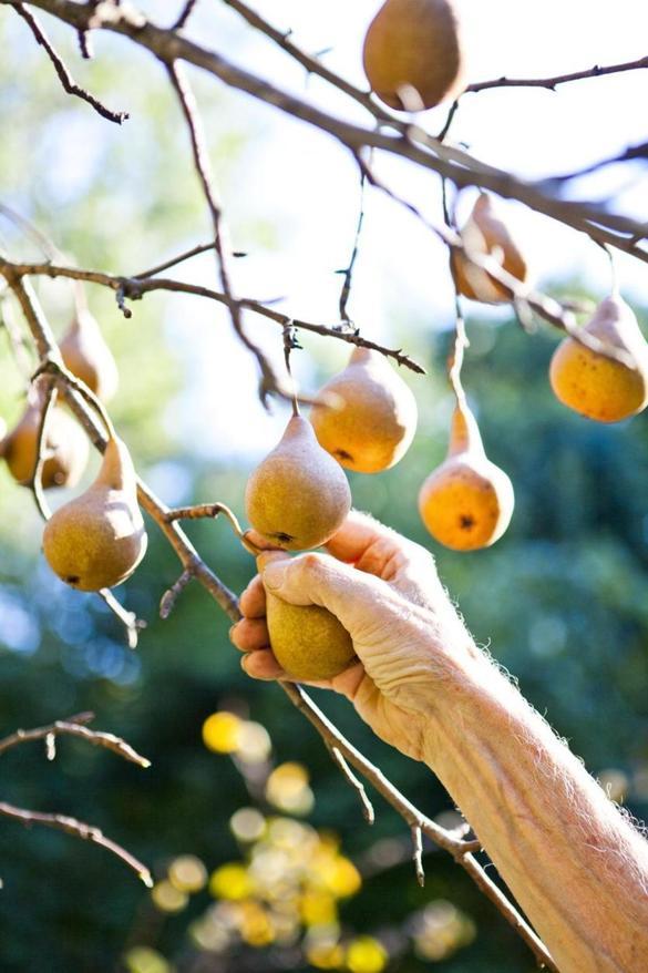 The best backyard fruit trees for New England  Magazine  The Boston