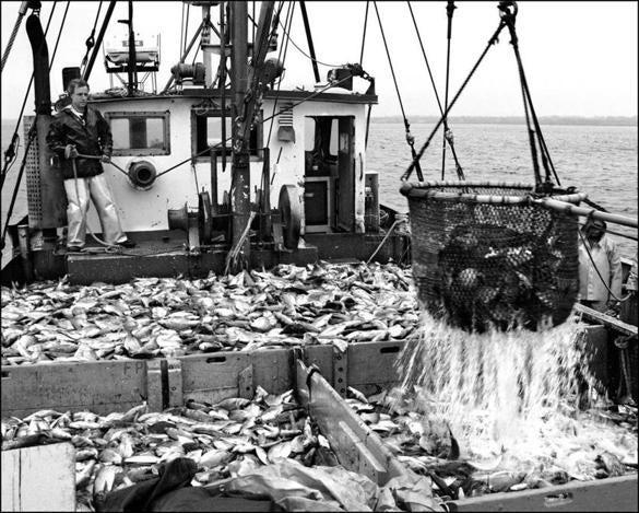 An ancient fishing method hangs on in rhode island ideas for Cod fishing ri