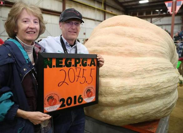 Topsfield MA 9/30/16 Steve Connolly and his wife, Nancy, of Sharon MA with their first place winning pumpkin 2,075.5 lbs during the 32nd All New England Giant Pumpkin Weigh-Off at the Topsfield Fair on Friday September 30, 2016. (Photo by Matthew J. Lee/Globe staff)