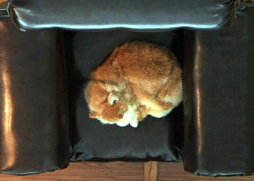 The upside-down room included a fake cat.