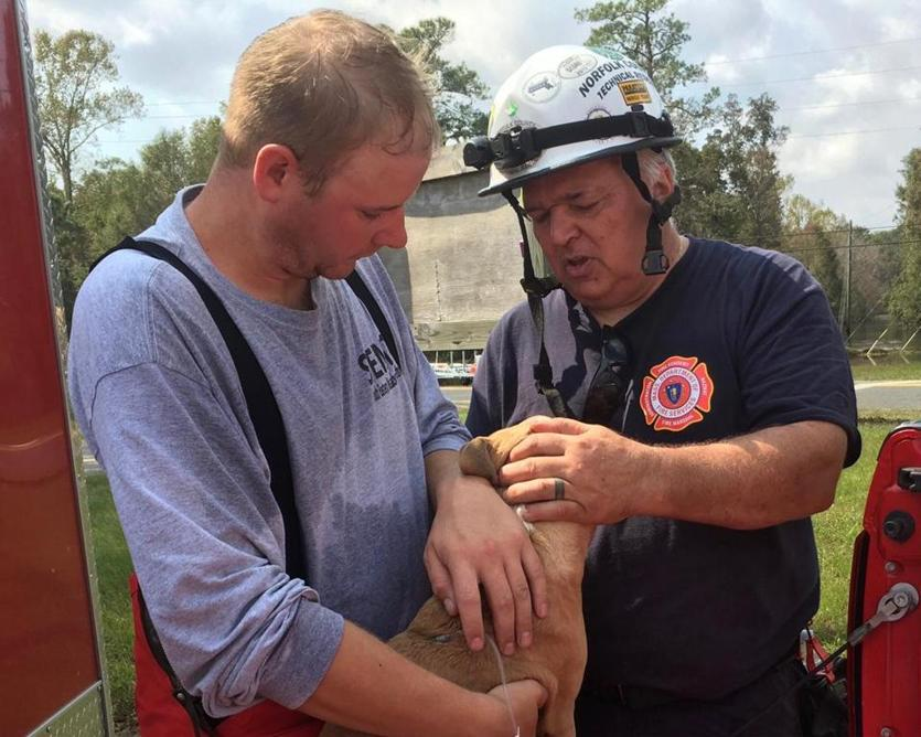 22rescueteam- Members of the Southeastern Mass Technical Rescue Team spent much of the week rescuing pets from floodwaters in North Carolina