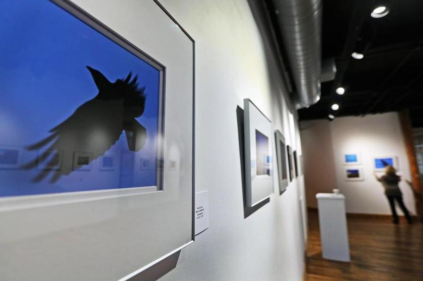 "Lawrence, MA 01-08-19: A photograph by David Lipsy called ""Motion Silhouette"" is shown while in the backround at far right Karen Van Welden-Herman hangs more photo during the installing part of an exhibit about crows at the Essex Art Center. (Jim Davis/Globe Staff)"