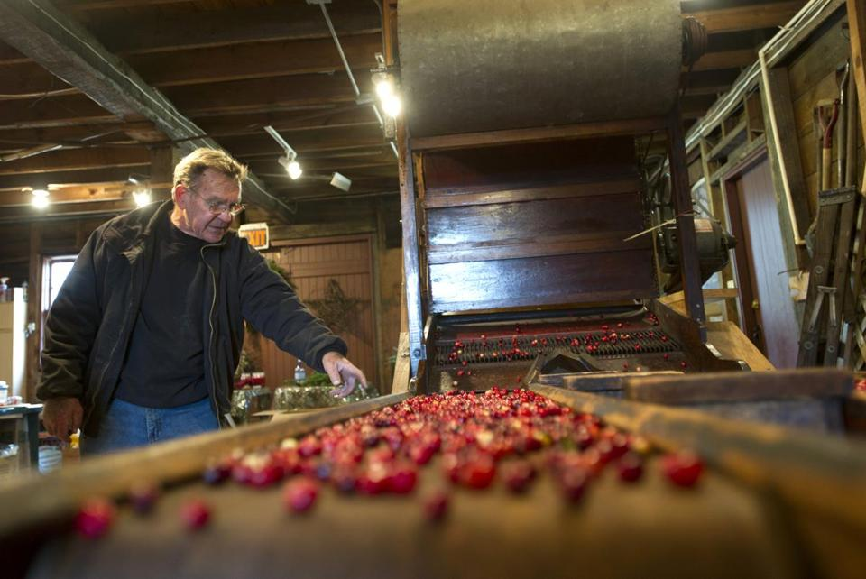 Jack Angley, owner of Flax Pond Farms, demonstrates a 19th-century cranberry sep-arator.