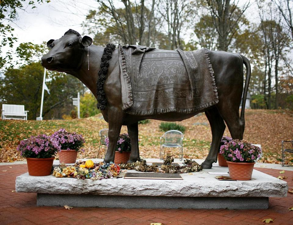 A statue of Emily the cow is featured at the Peace Abbey in Sherborn.