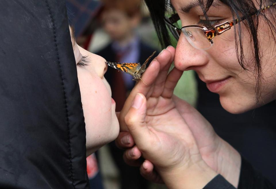 Benji Barnett, 5, got a close look at a painted lady butterfly Wednesday from assistant teacher Livi Rubin at the Jewish Preschool of Lexington.