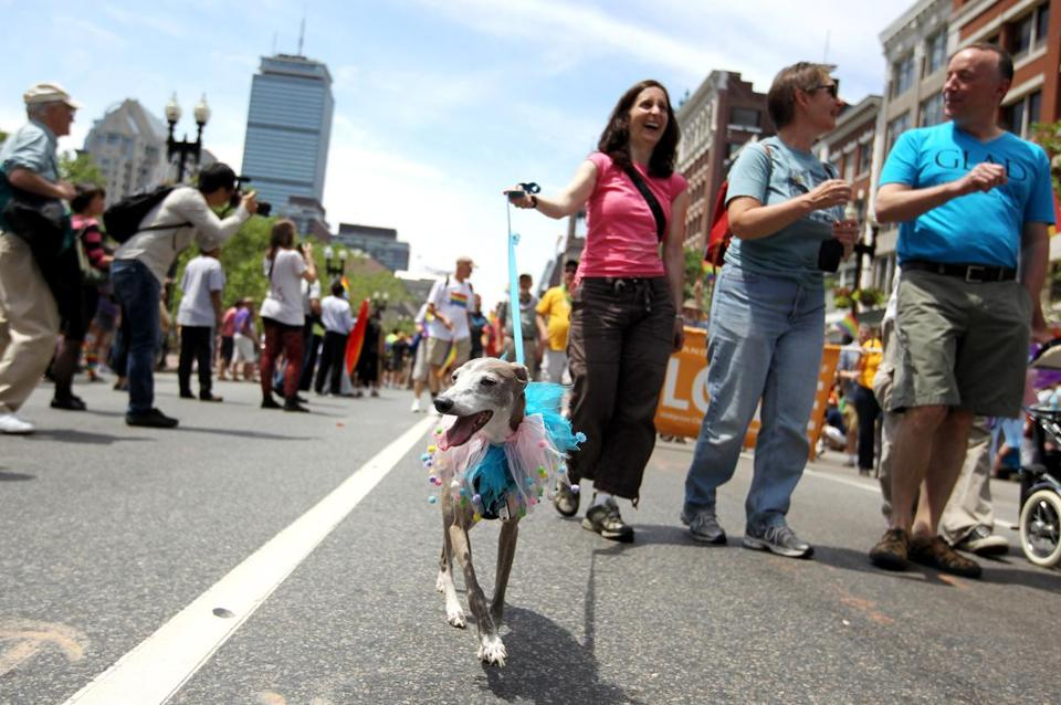 "Leo the dog was part of the festivities at the Gay Pride Parade in Boston on Saturday. Along the route, some supporters yelled out, ""Happy Pride"" as the parade moved by."