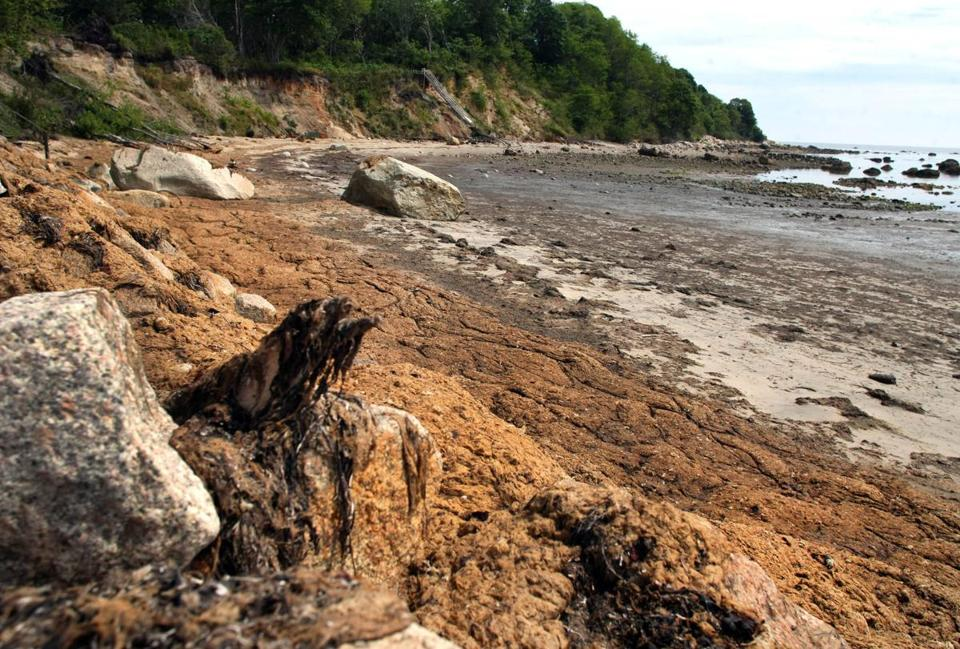Smelly seaweed covered the rocks and shoreline of Stage Point Cove in Plymouth on Saturday.