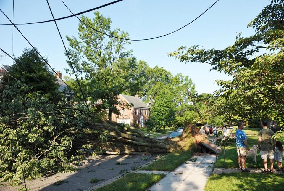 A downed tree took out power lines last week in Washington, D.C.