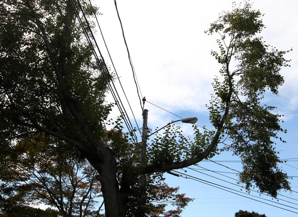 In Milton in September 2010, NStar cut tree limbs in an effort to keep them from damaging utility lines.