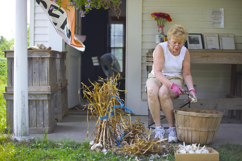 Volunteer Carmela Horlitz cleaned garlic, part of an effort to help keep McGrath Farm in Concord open since owner Patrick McGrath's sudden death in June at 64.
