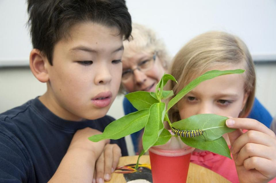 Thoreau Elementary students Sam Neville and Emma Sabin, backed up by teacher Susan Erickson, study a monarch caterpillar.