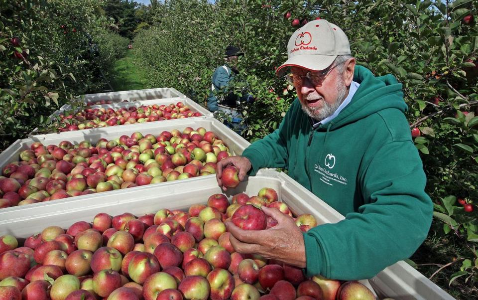 Frank Carlson said a spring freeze wiped out half the apple crop at his Harvard orchards.
