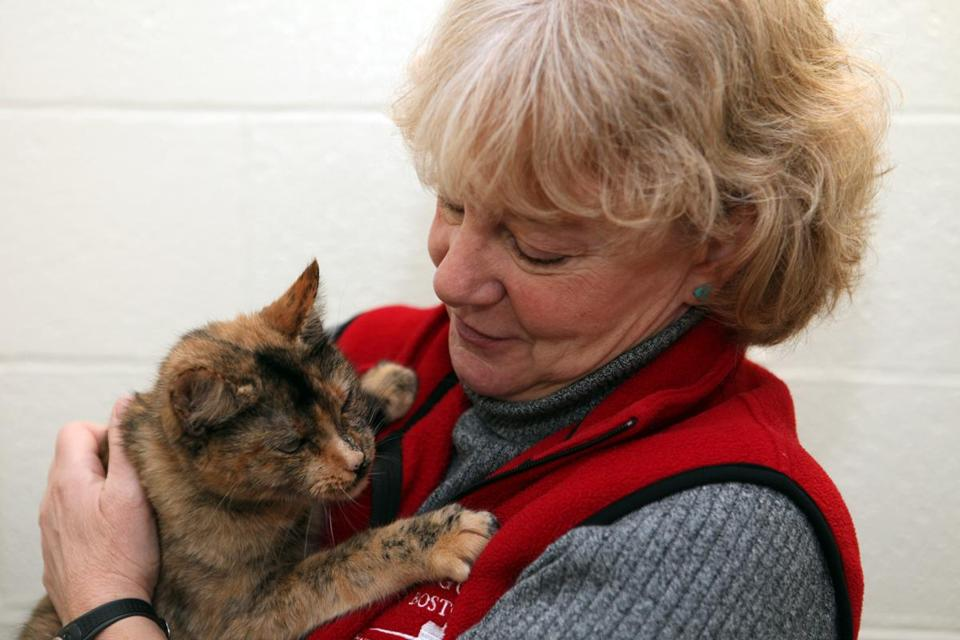 Sandra Luppi helps care for and find homes for animals, like Lucy, a tortoise shell cat, at a Brewster animal shelter.