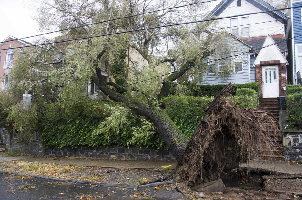 A tree in Jersey City, N.J., became tangled in power lines after being brought down by high winds from Sandy. More than 113,000 trees in the state were destroyed or damaged.