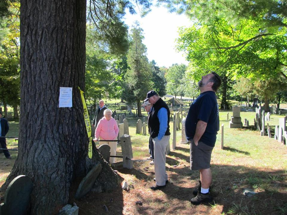 Arborist Carl Cathcart (center, in vest) is joined by Shirley officials for an inspection of the Center Cemetery tree this fall.