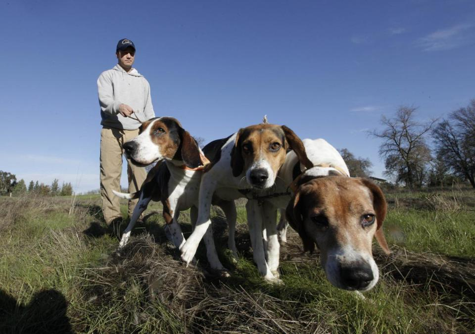 Josh Brones, president of the California Houndsmen for Conservation, walked his hunting dogs near his home in Wilton, Calif.