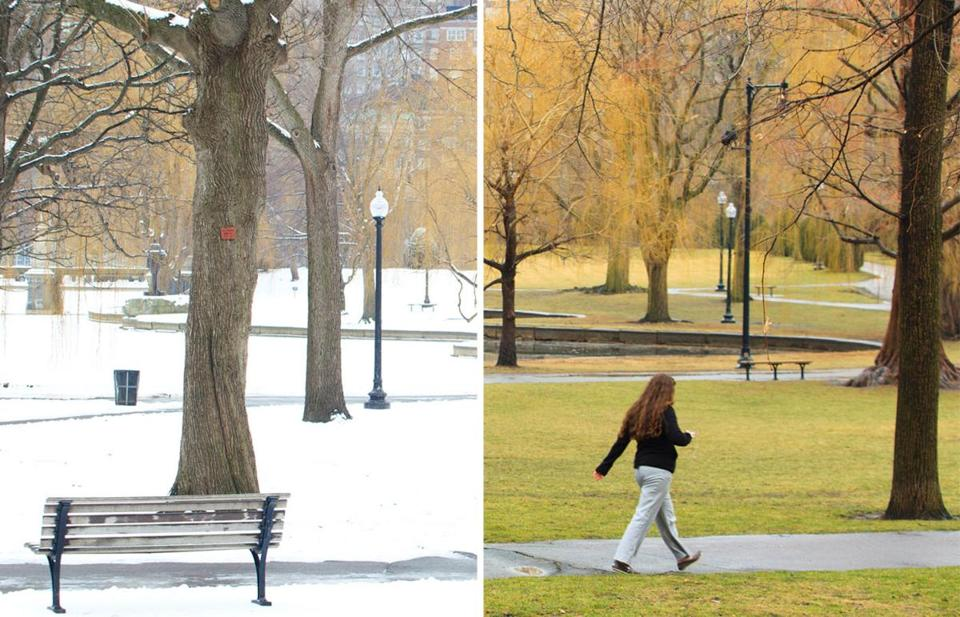 A pedestrian walked through a snowy Public Garden on Jan. 29 (left), but on Jan. 30 (right), the Public Garden was green again as temperatures soared into the high 50s.