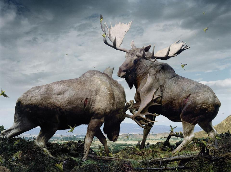 "Simen Johan's ""Untitled #133,"" part of his ""Until the Kingdom Comes"" exhibit at Brown University's David Winton Bell Gallery."