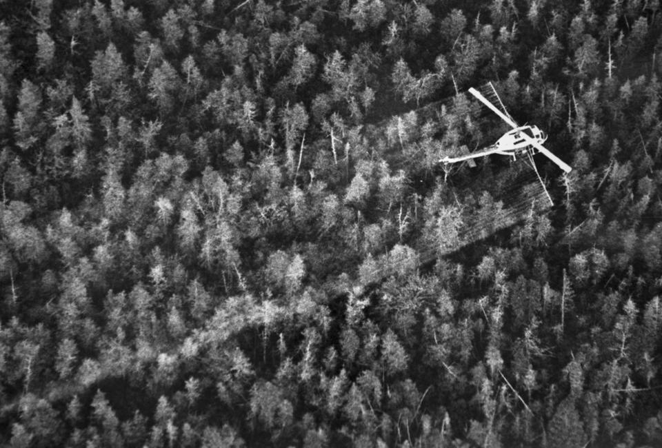 Maine conducted aerial spraying in the early 1980s to protect trees against the infestation.