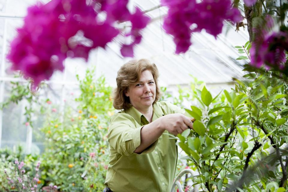 Lynn Ackerman works in four different greenhouses built between 1804 and 1930 on the Lyman Estate.
