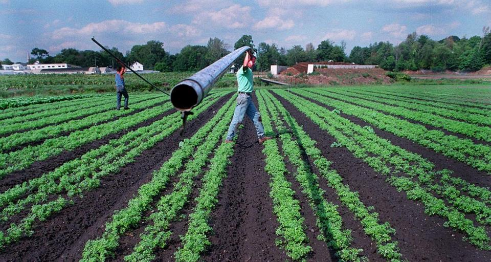 Workers installed an irrigation system at Wilson Farm in Lexington in 1995. Donald Wilson, co-owner of the farm, will join a panel discussion on the town's agricultural history on Sunday from 1 to 3 p.m. at Lexington High School.