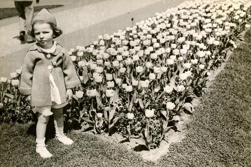 May 4, 1936: Ellen Colpoys McDonough posed by the tulip bed in the Public Garden.