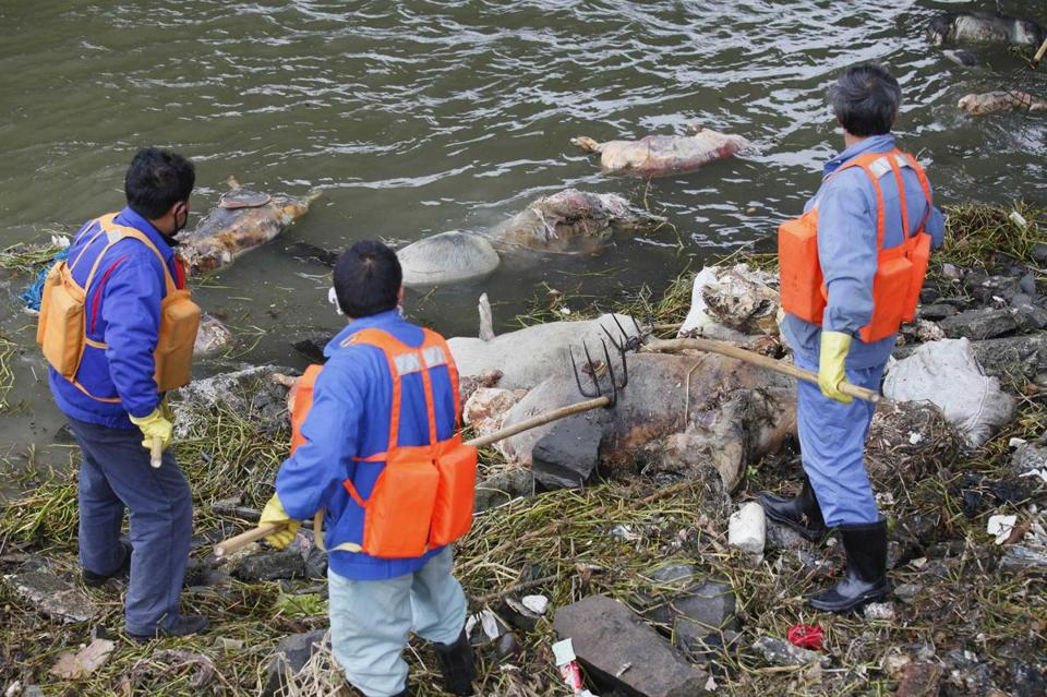 Cleaning workers retrieved the carcasses of pigs from a branch of the Huangpu River in Shanghai on March 10.