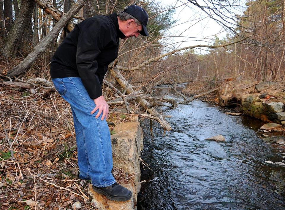 Volunteer Ed Menz watches as herring swim toward the fish ladder at Upper Mill Pond in Pembroke.