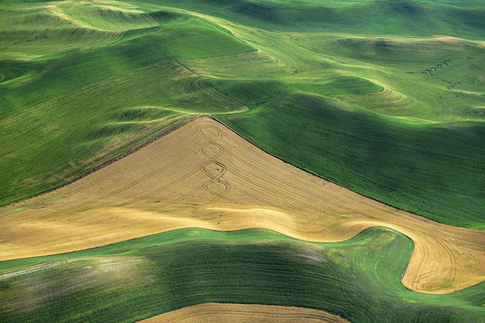 "Neal Rantoul's ""Near Pullman, WA."" part of his ""Wheat, Washington, 2009-2012"" series at Danforth Art."