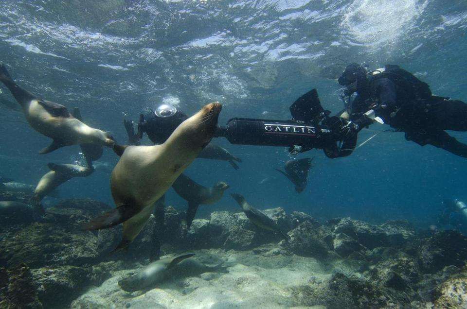 A survey dive at Champion Island in the Galapagos encountered a large group of sea lions.