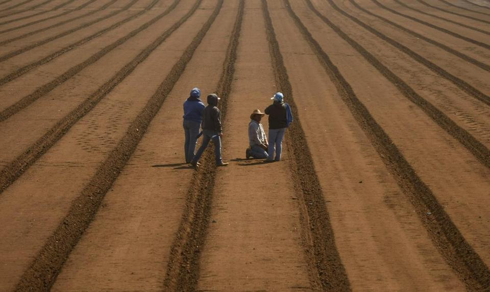 Farm workers rested before planting artichokes near Watsonville, Calif., in April.