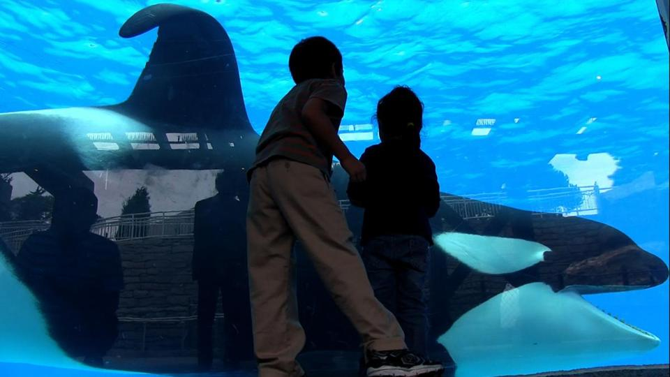 """Blackfish"" focuses on a SeaWorld orca who killed three people."