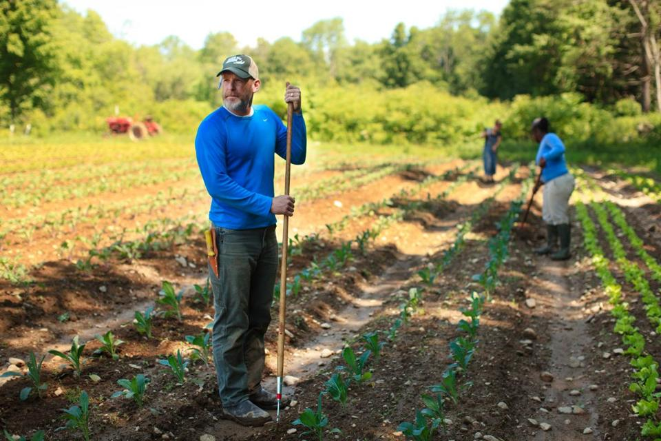 Farm School Student Erik Jacobs looks up from weeding a row of kale at the Farm School.