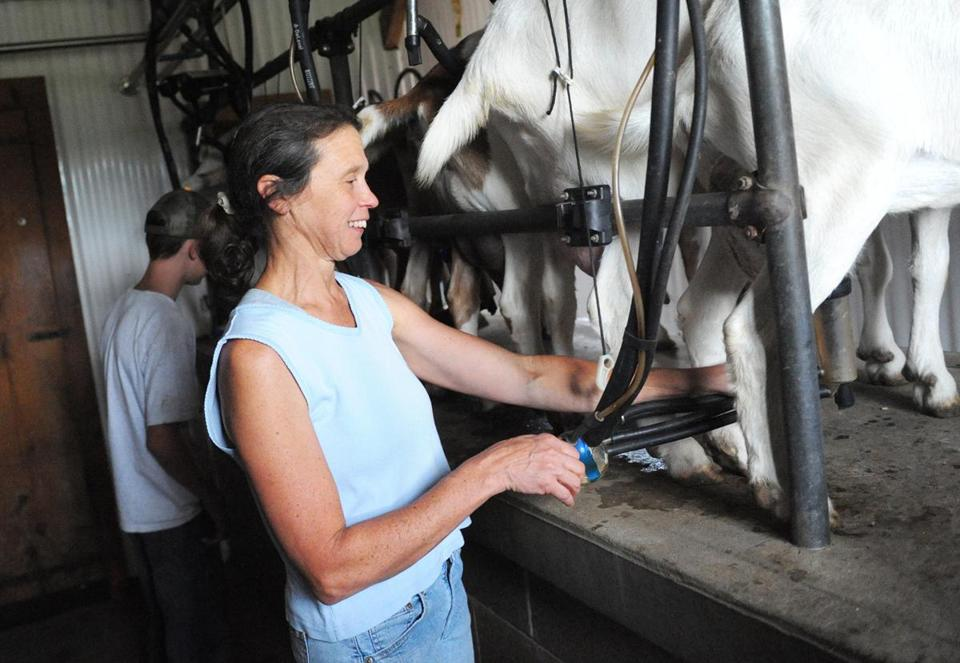 Ann Starbard milks dairy goats at Crystal Brook Farm. She considers the goats her co-workers.
