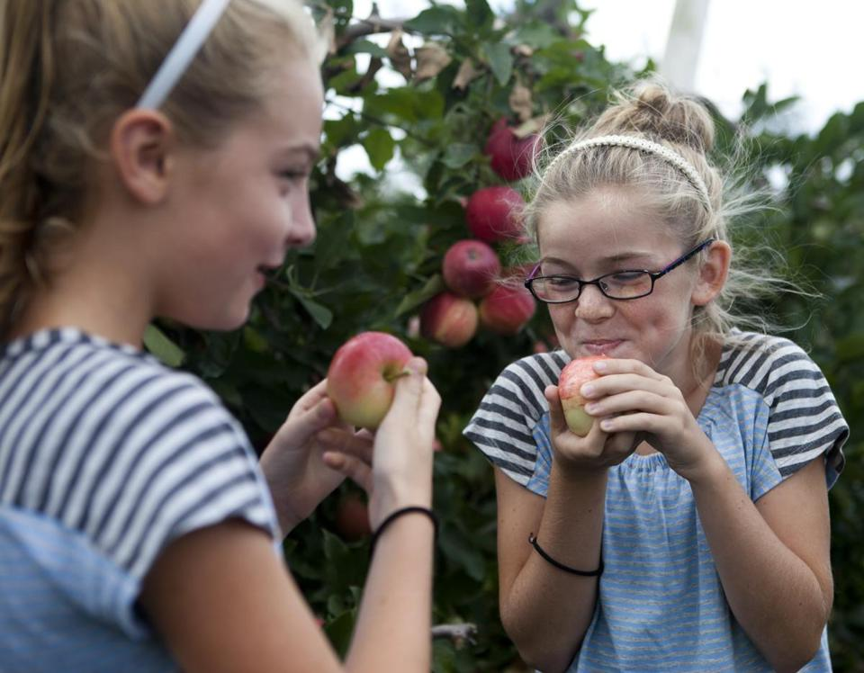Lucy Twombly, 10, (left) shared an apple with her friend Jane Reilly, 10, at Russell Orchards in Ipswich.