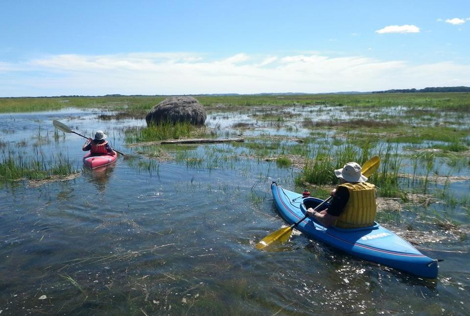 The Sea Plum Island |  A quiet tour through a marsh.