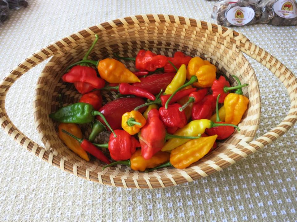Rooster Fricke grows 50 varieties of chilies, including the hottest of  all, the Trini-dad Moruga Scorpion (right), on his Falmouth microfarm.