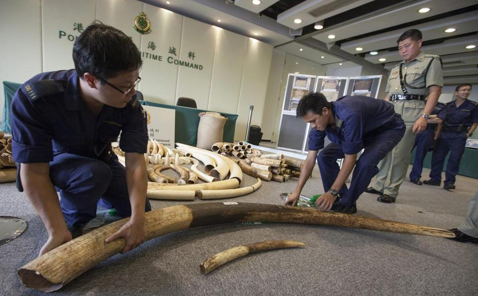 More than 11 tons of elephant tusks have been seized in Hong Kong in that last year, antismuggling officials say.