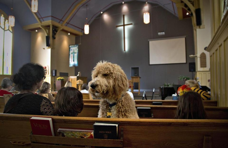 A dog attended a service before getting blessed in British Columbia on Sunday.